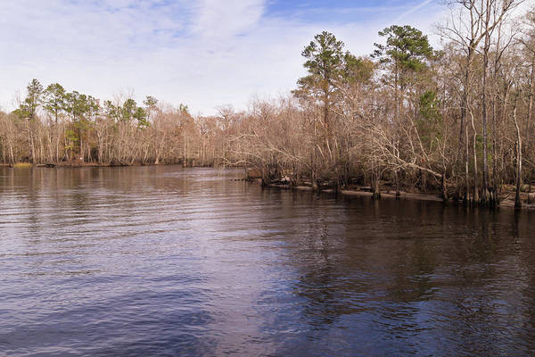 Photograph - Waccamaw River In Winter by MM Anderson