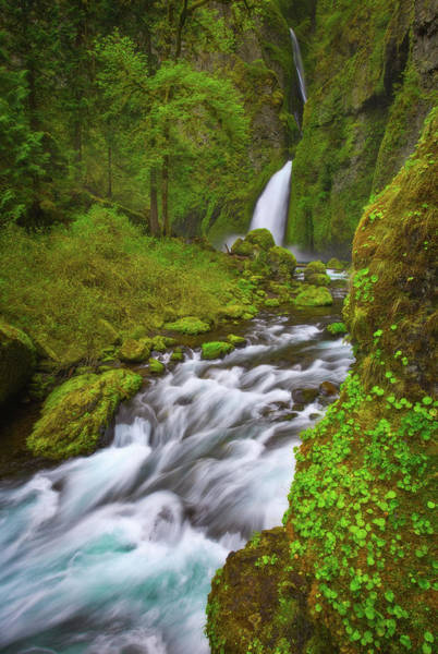 Photograph - Wahclella Falls by Darren White
