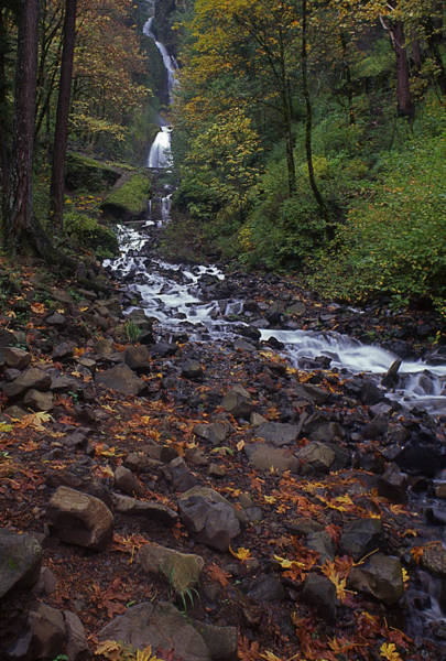 Photograph - Wahkeena Falls by Todd Kreuter