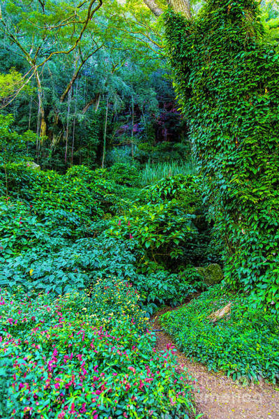 Photograph - Waimea Arboretum And Botanical Garden by Jon Burch Photography