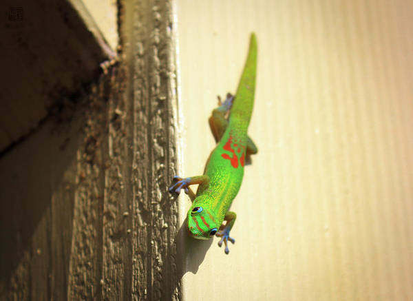 Photograph - Waimea Gecko by Geoffrey Lewis