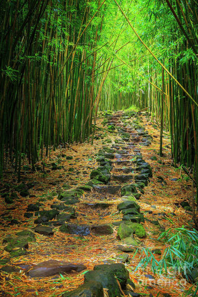 Stalk Photograph - Waimoku Bamboo Forest #2 by Inge Johnsson