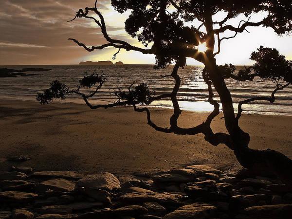 Pohutukawa Photograph - Waitete Bay, Coromandel, New Zealand by Steve Burling