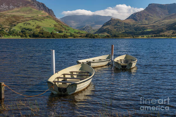 Moor Photograph - Waiting by Adrian Evans