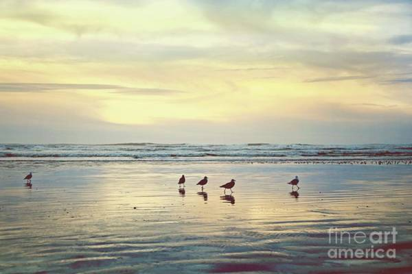 Wall Art - Photograph - Waiting For Sunset by Sylvia Cook