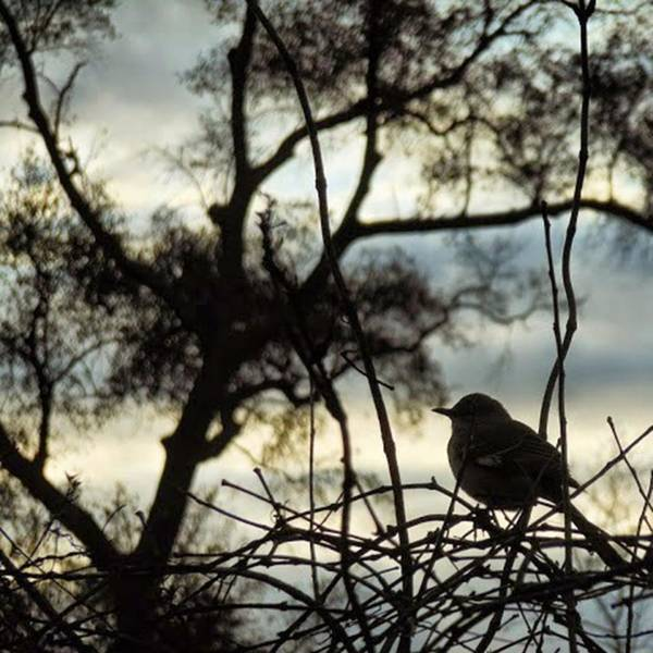Photograph - Waiting For The Sun To Rise! by Cheray Dillon