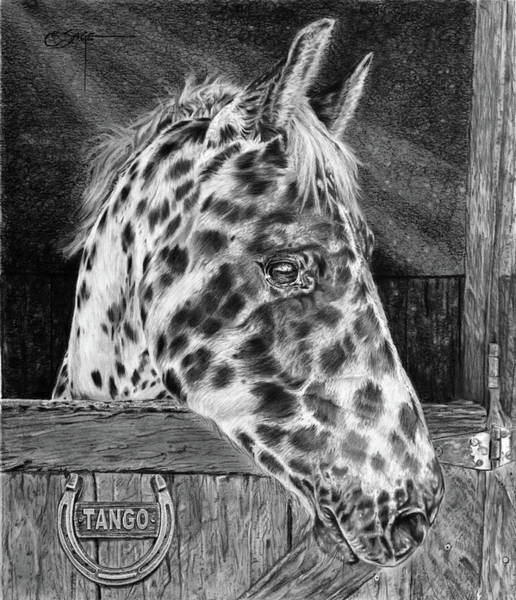 Appaloosa Drawing - Waiting For You by Elizabeth Sage