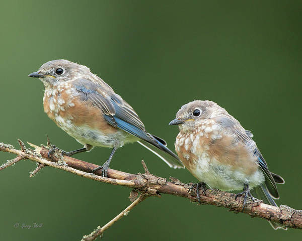 Photograph - Waiting To Be Fed by Gerry Sibell