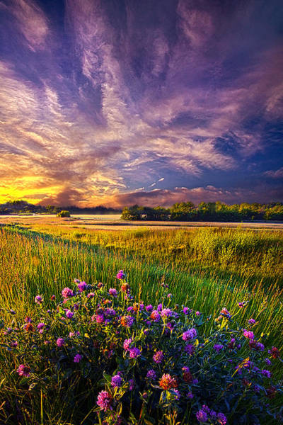 Photograph - Waiting To Be Found by Phil Koch