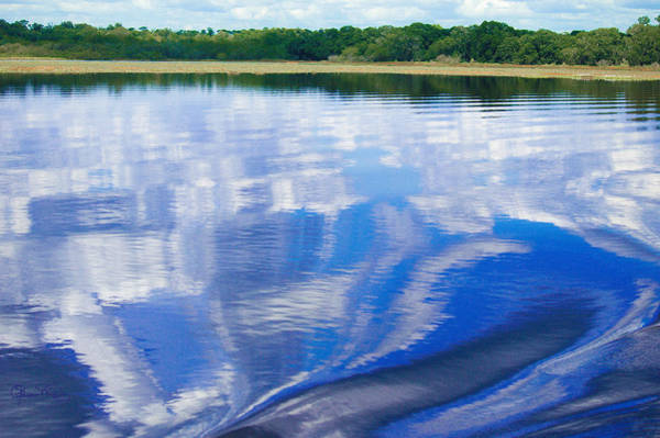 Photograph - Wake On Myakka River by Susan Molnar
