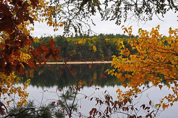 Photograph - Walden Pond Fall Foliage Leaves Concord Ma by Toby McGuire