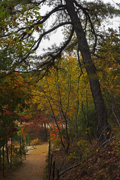 Photograph - Walden Pond Path Into The Forest 2 by Toby McGuire