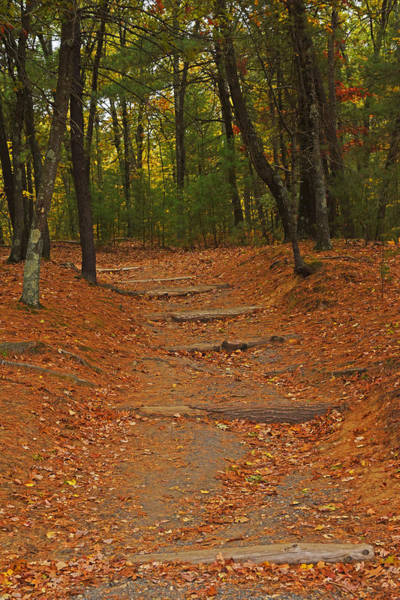 Photograph - Walden Pond Path Into The Forest by Toby McGuire
