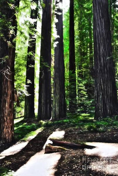 Photograph - Walk Among The Giants by Mel Steinhauer
