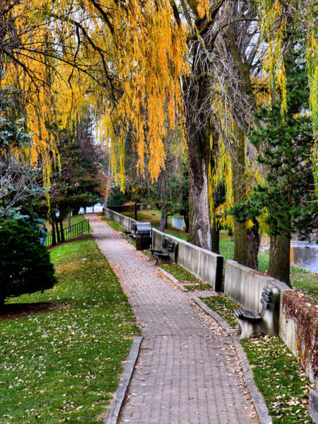 Photograph - Walk In The Park by Scott Hovind