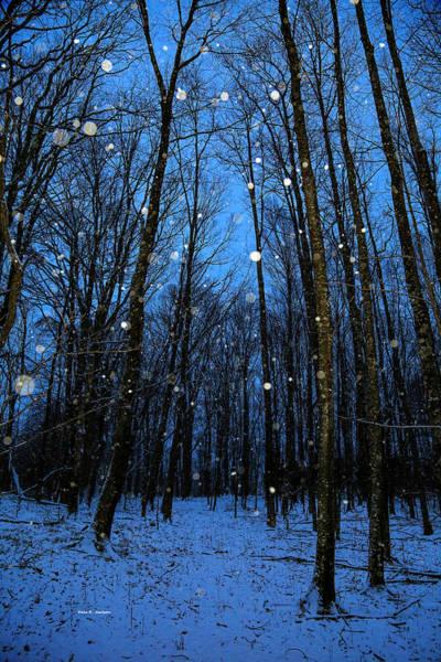 Walk In The Snowy Woods Art Print