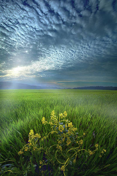 Photograph - Walk In The Spirit by Phil Koch