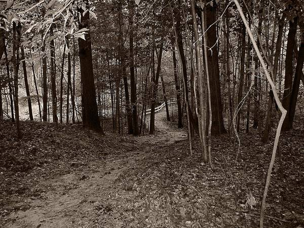 Photograph - Walk In The Woods by Scott Hovind