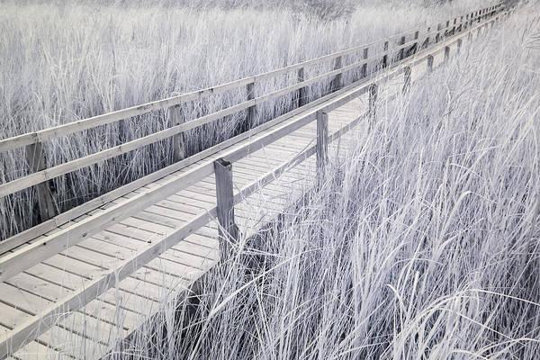 Walk Through The Marsh Art Print