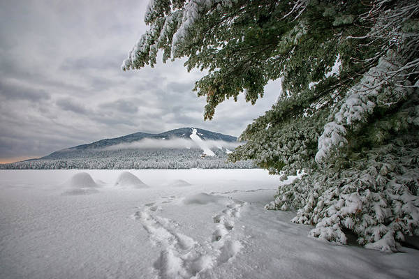Photograph - Walk With Me To The Mountain by Darylann Leonard Photography