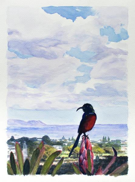 Painting - Walker Bay Sunbird by Christopher Reid