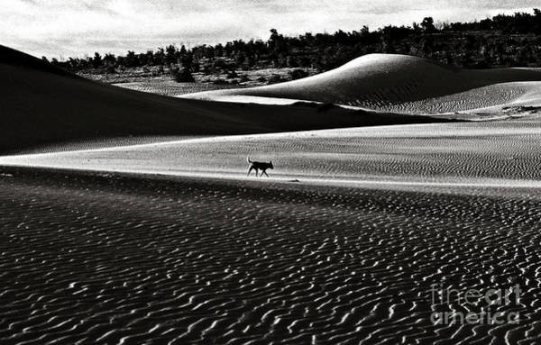 Photograph - Walking Alone Through The Desert Of Life by Silva Wischeropp