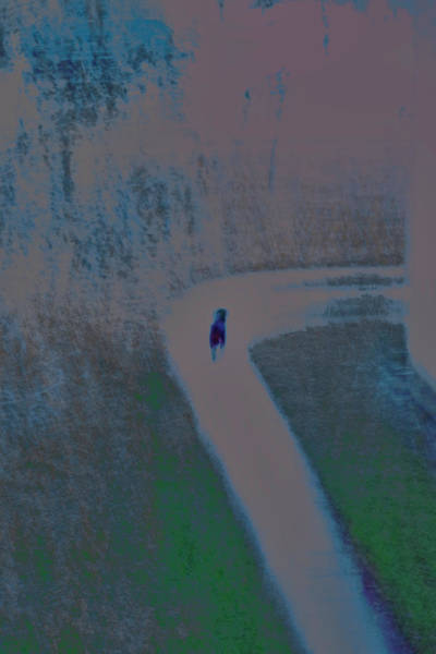 Otp Photograph - Walking Dog by Marshall Barth