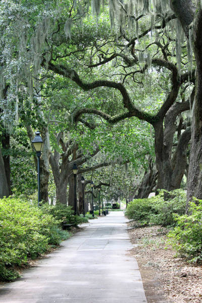 Forsyth Photograph - Walking In The Park by Suzanne Gaff