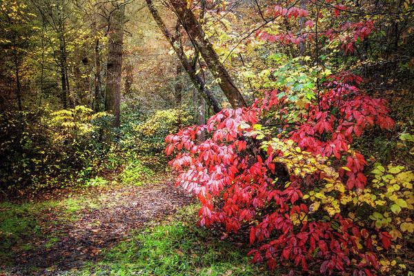 Photograph - Walking In The Woods In Autumn by Debra and Dave Vanderlaan