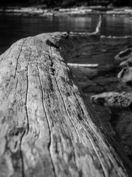 Photograph - Walking On A Log by Trance Blackman