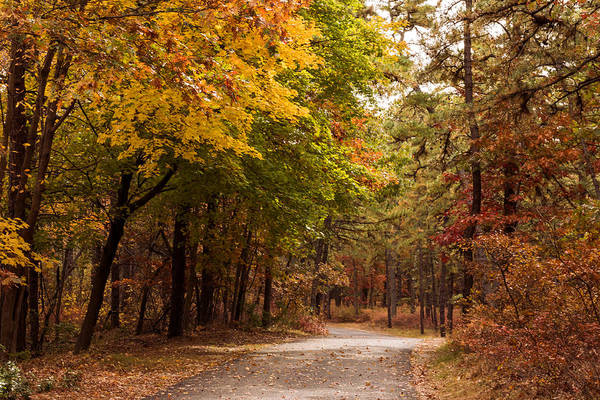 Photograph - Walking Path In Fall Winding River Park New Jersey by Terry DeLuco