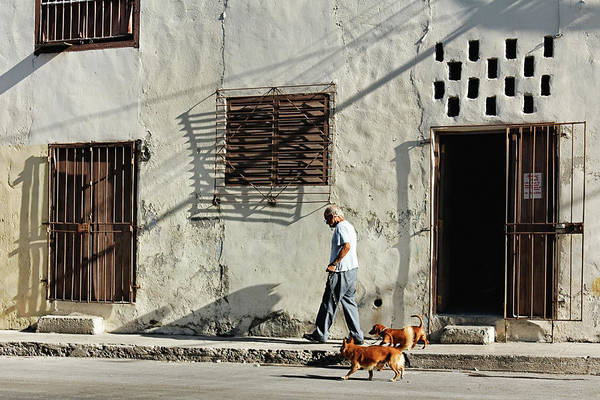 Photograph - Walking The Dogs by Dawn Currie