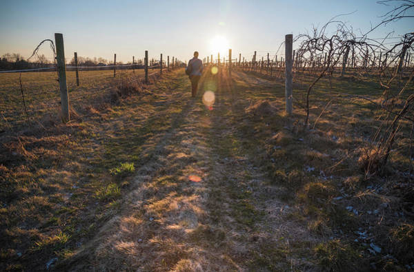 Photograph - Walking The Vines by Kristopher Schoenleber