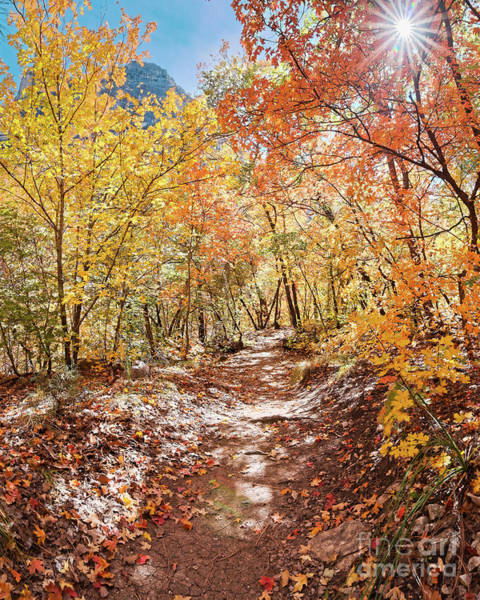 Photograph - Walking Through A Bigtooth Maple Forest In Mckittrick Canyon - Guadalupe Mountains National Park  by Silvio Ligutti