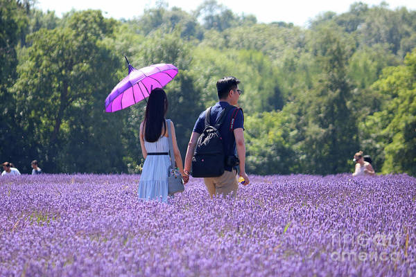 Photograph - Walking Through Lavender by Julia Gavin