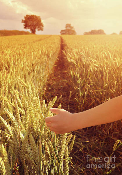 Wall Art - Photograph - Walking Through Wheat Field by Lyn Randle