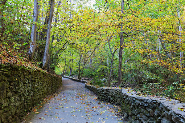 Photograph - Walking Trail by Jill Lang