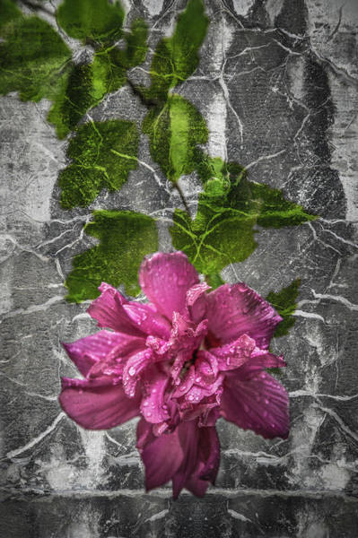 Photograph - Wall Flower 1 by Michael Arend