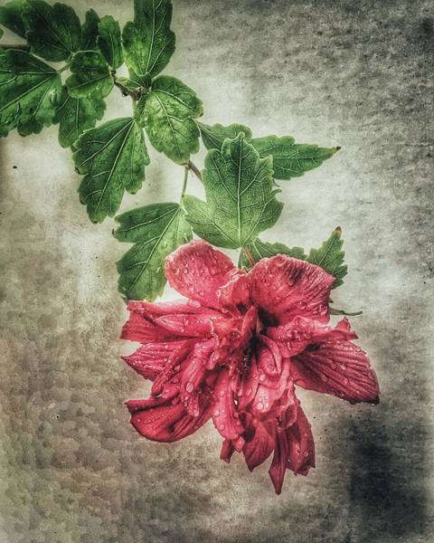 Photograph - Wall Flower 2 by Michael Arend