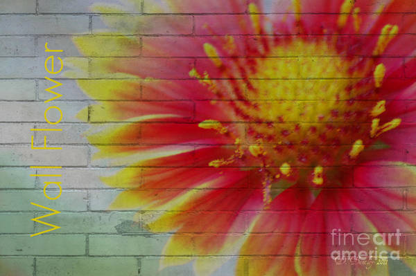 Photograph - Wall Flower by Donna Bentley