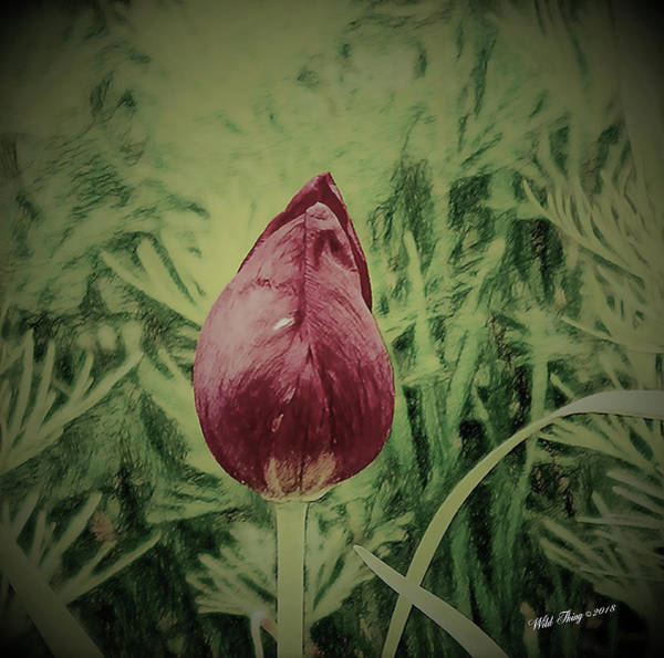 Digital Art - Wall Flower by Wild Thing