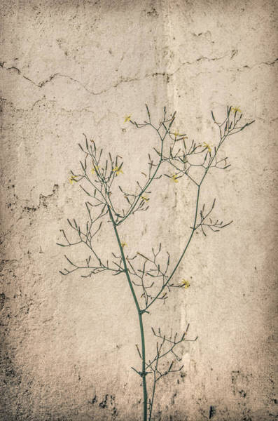 Photograph - Textured Pattern by Marilyn Wilson