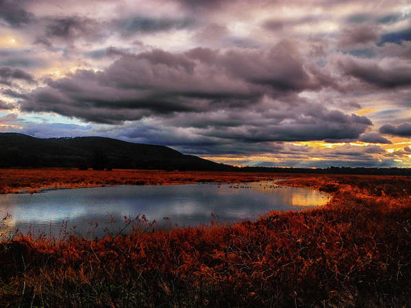 Photograph - Wallkill River National Wildlife Refuge by Raymond Salani III