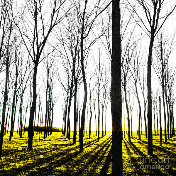 Photograph - Walnut Grove Fall Sunset by Michael Arend