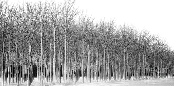 Photograph - Walnut Grove On A Winter Day by Michael Arend
