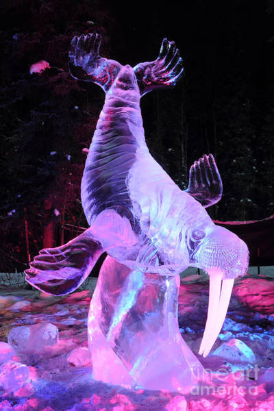 Ice Carving Photograph - Walrus Ice Art Sculpture - Alaska by Gary Whitton