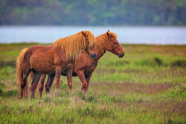 Photograph - Wandering The Marsh by Rick Berk