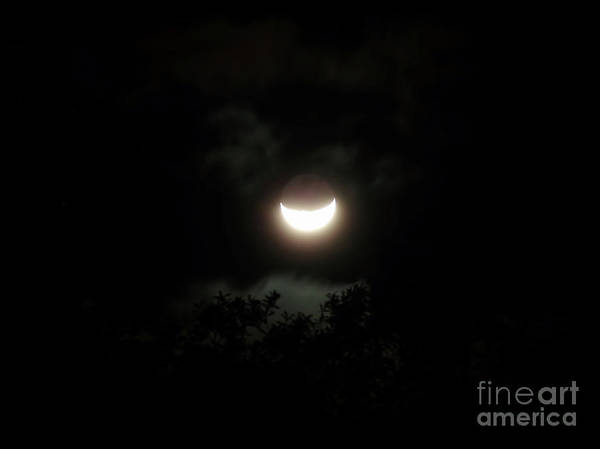Photograph - Waning Moon Above The Trees by D Hackett