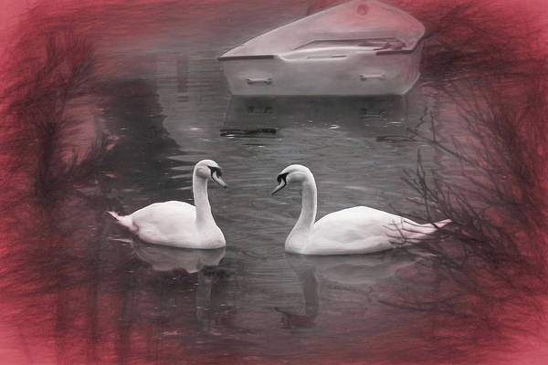 Mute Swan Photograph - Wanna Go For A Boat Ride ? by Donna Kennedy