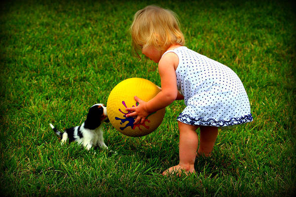 Photograph - Wanna Play Ball by Susie Weaver